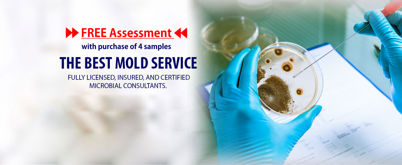 Mold Inspection, Mold Testing, Mold Detection, Mold Inspectot